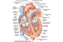 BOOSTING MEN'S CARDIAC HEALTH